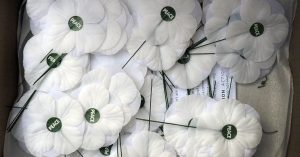 Armistice white poppies